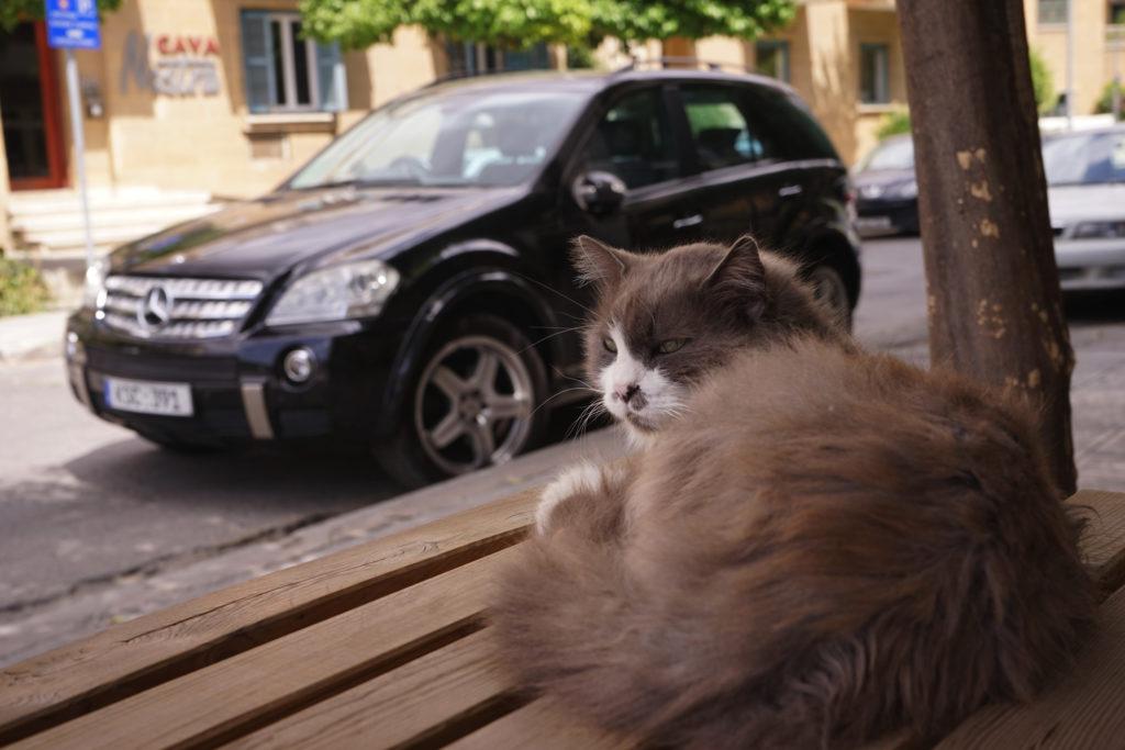 DSC07069 1024x683 - この世界はネコだらけ!ネコネコネコ!ネコの写真祭り