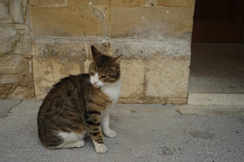 DSC07163 1024x683 - この世界はネコだらけ!ネコネコネコ!ネコの写真祭り