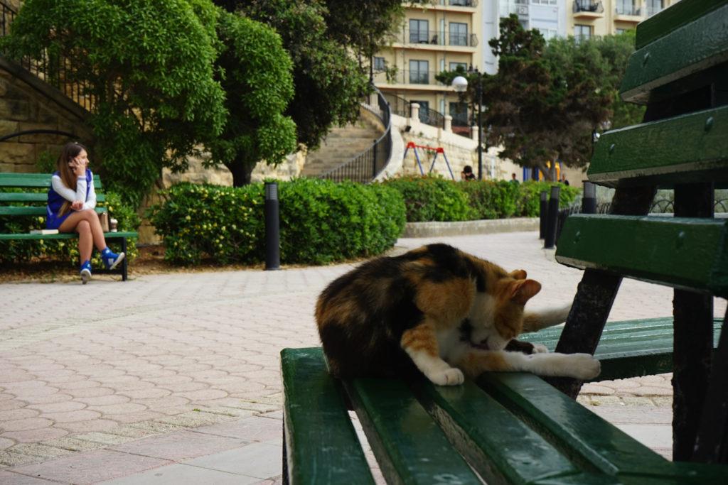 DSC06481 1024x683 - この世界はネコだらけ!ネコネコネコ!ネコの写真祭り