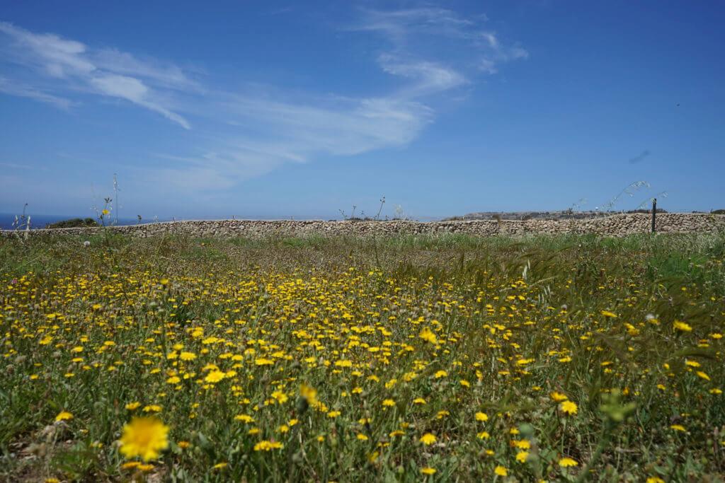 DSC06705 1024x683 - 【マルタ旅行記4】蒼い海と極彩色。他に何かいる?イムドラ神殿