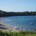 【ニュージーランド ワイヘキ島】ワイヘキ島へのアクセスとモデルコース