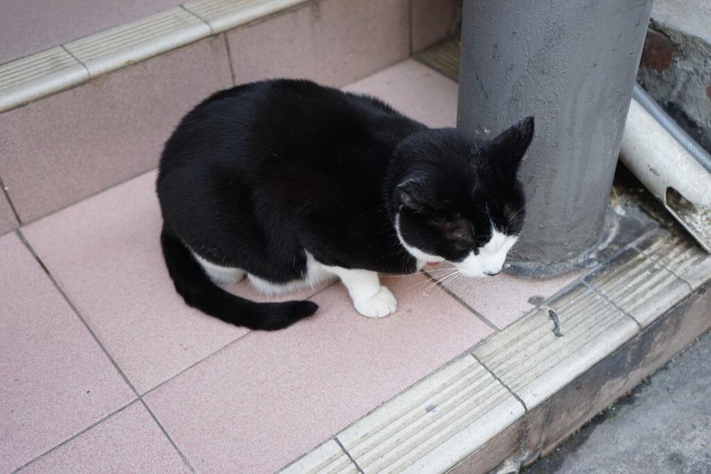 DSC07751 1024x683 - この世界はネコだらけ!ネコネコネコ!ネコの写真祭り