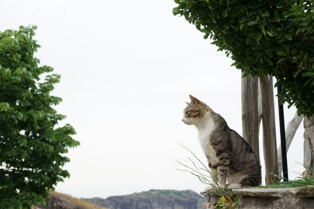 DSC08158 1024x683 - この世界はネコだらけ!ネコネコネコ!ネコの写真祭り