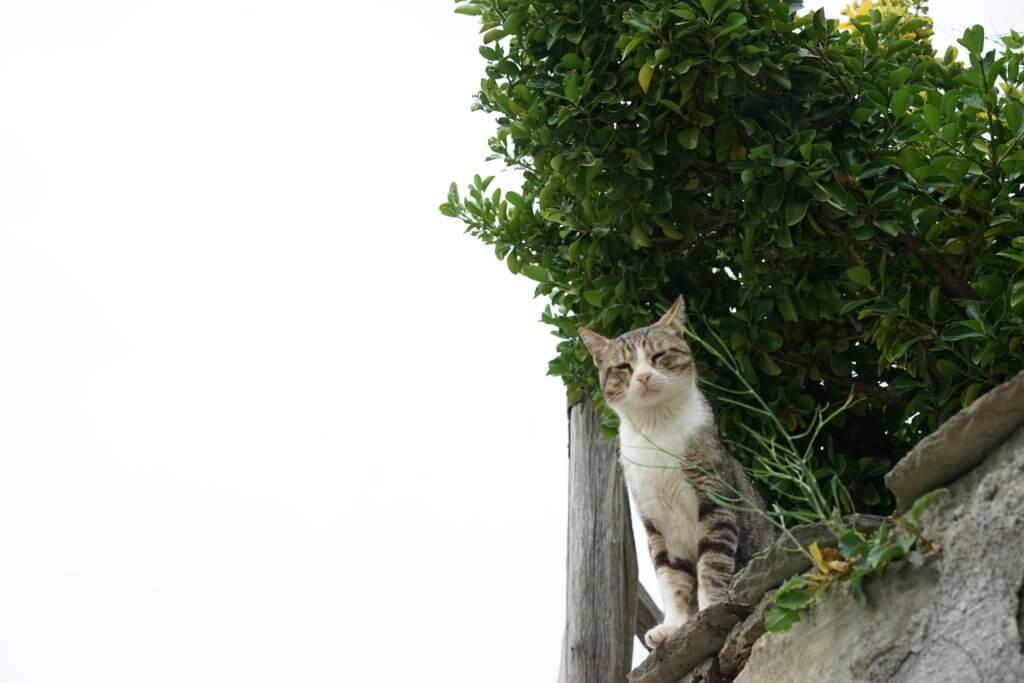 DSC08159 1024x683 - この世界はネコだらけ!ネコネコネコ!ネコの写真祭り