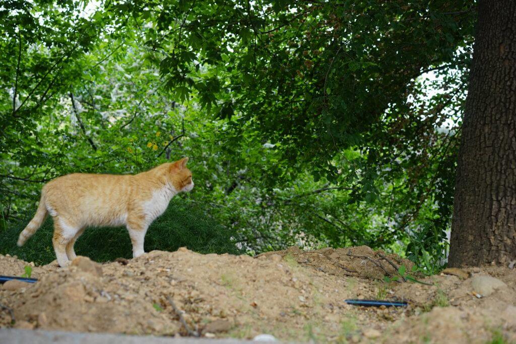 DSC08172 1024x683 - この世界はネコだらけ!ネコネコネコ!ネコの写真祭り