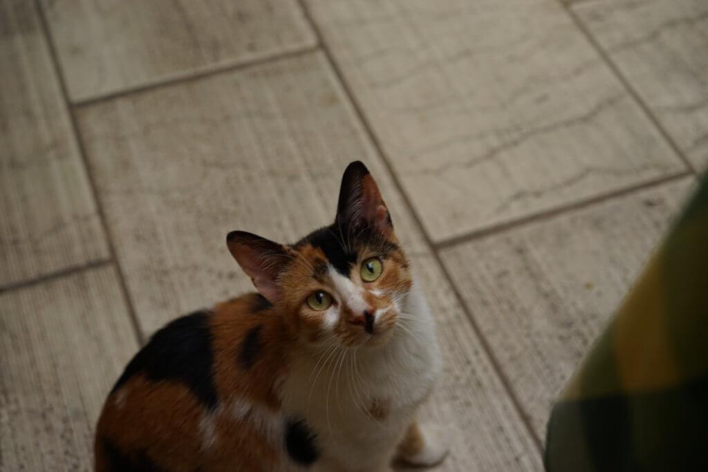 DSC08420 1024x683 - この世界はネコだらけ!ネコネコネコ!ネコの写真祭り