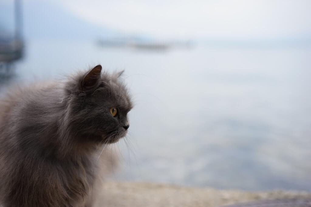 DSC08843 1024x683 - この世界はネコだらけ!ネコネコネコ!ネコの写真祭り