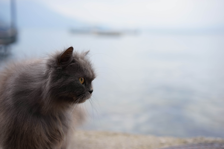 DSC08843 - この世界はネコだらけ!ネコネコネコ!ネコの写真祭り