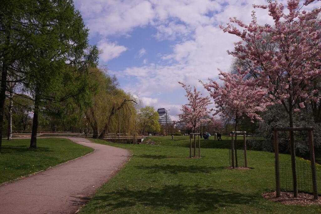 DSC02017 1024x683 - 【ラトビア リガ】あの桜は、きっと今年も春を奏でる。