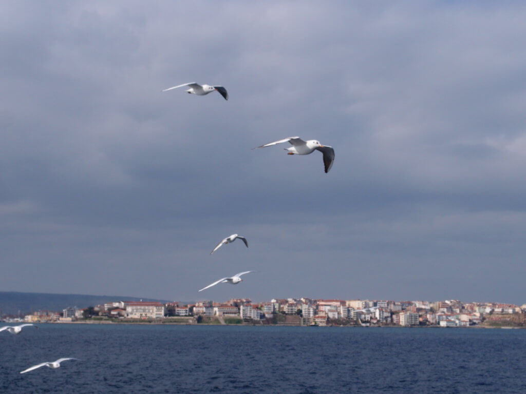 P2164751 1024x768 - 【トルコ】トルコリラ積立はいかが?資源開発の制限が解かれる2023年。ローザンヌ条約の密約とトルコの憂鬱