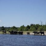 DSC2737 150x150 - 【ボツワナ チョベ国立公園】ビクトリアフォールズからの日帰りサファリツアーへ
