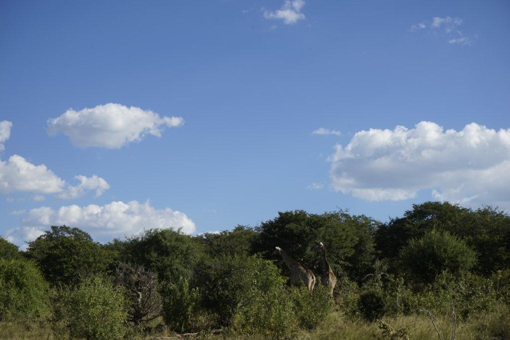DSC2845 1024x683 - 【ボツワナ チョベ国立公園】ビクトリアフォールズからの日帰りサファリツアーへ