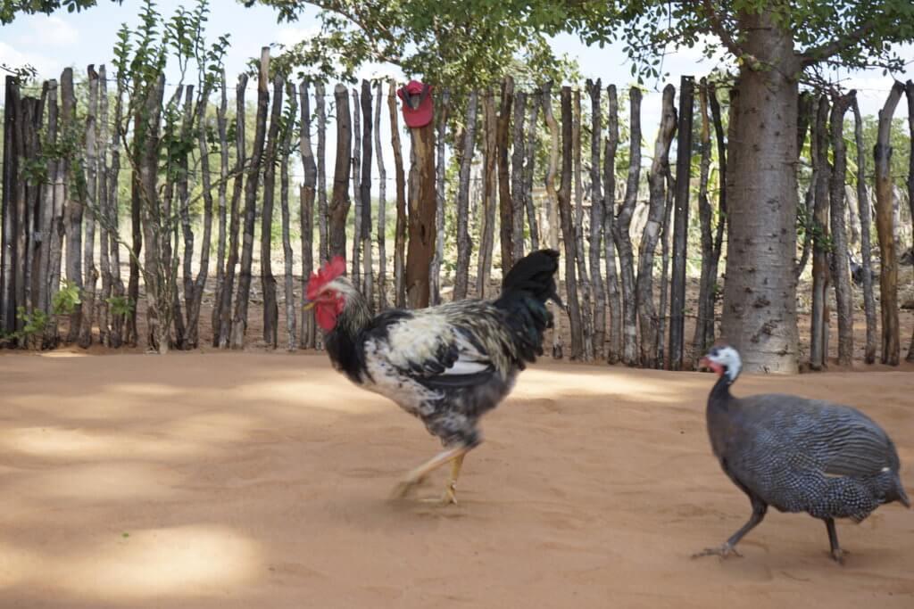 DSC3129 1024x683 - 【ジンバブエ旅行記5】初めてのアフリカ・ジンバブエひとり旅!電気も水道もない村