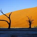 【ナミビア ナミブ砂漠・セスリム】絵画のような景色。ナミブ砂漠デッドフレイへの行き方
