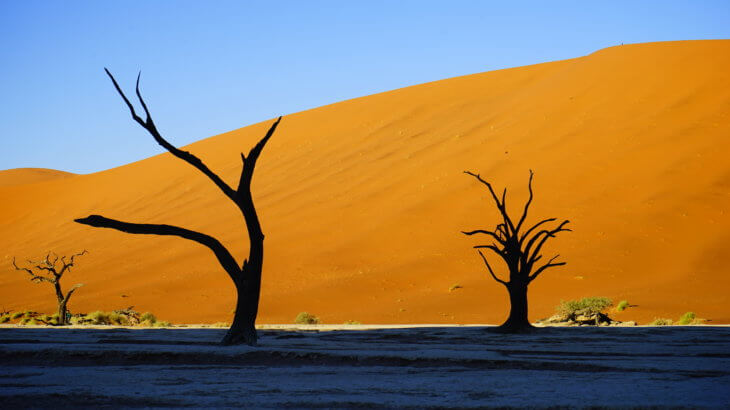 DSC3773 730x410 - 【ナミビア ナミブ砂漠・セスリム】絵画のような景色。ナミブ砂漠デッドフレイへの行き方