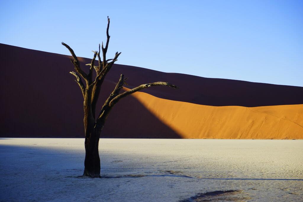 DSC3795 1024x683 - 【ナミビア ナミブ砂漠・セスリム】絵画のような景色。ナミブ砂漠デッドフレイへの行き方