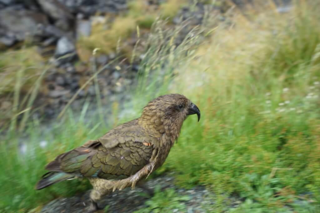 DSC01042 1024x683 - 【ニュージーランド テ・ワヒポウナム】ミルフォードもマウントクック も!美しき南島の大自然