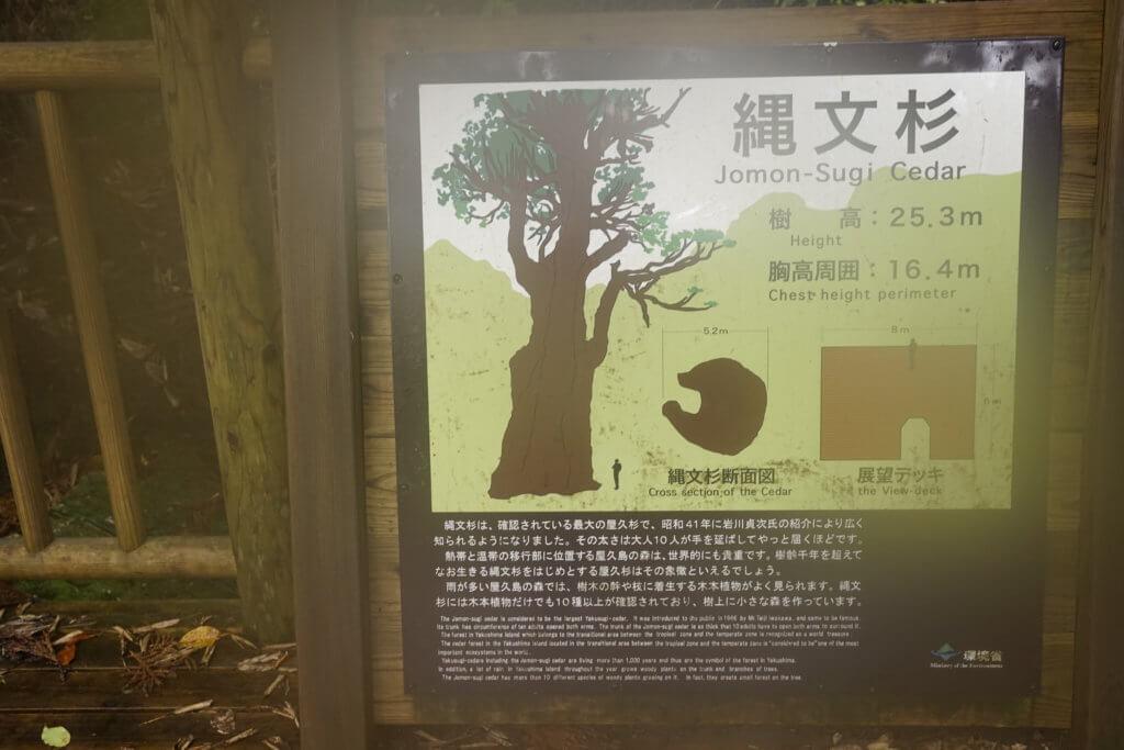 DSC8780 1024x683 - 【屋久島】縄文杉に行くにはどうする?何が必要?レンタカー?