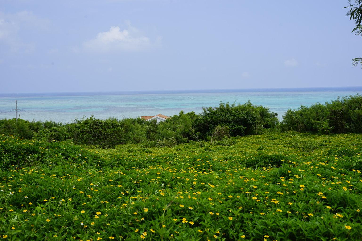DSC8848 1536x1024 - 【沖縄 小浜島】石垣島から日帰りも!リゾートアイランドをサイクリングしよう!
