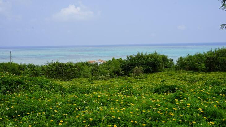 DSC8848 730x410 - 【沖縄 小浜島】石垣島から日帰りも!リゾートアイランドをサイクリングしよう!