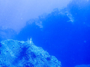 20200829 P8290565 300x225 - 【東京 三宅島】海、火山、星。最高の自然を満喫しよう!