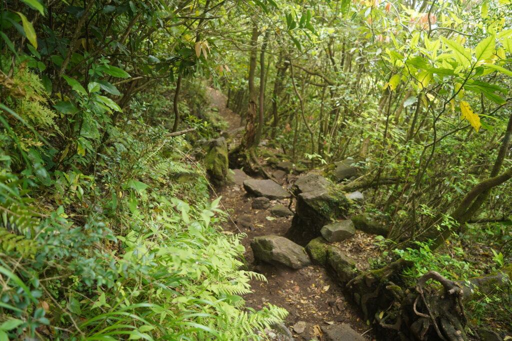 DSC01582 1024x683 - 【鹿児島旅行記3】空は青、山は黄色。そして輝く開聞岳。