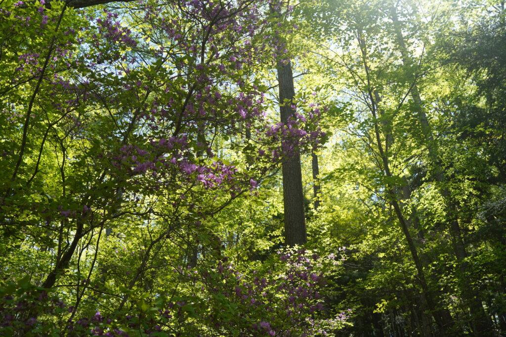DSC01659 1024x683 - 森や滝に癒されるのは何の力?マイナスイオンなんてものはない!