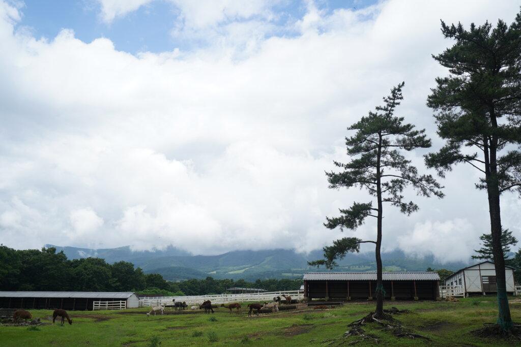 DSC02047 1024x683 - 【栃木 那須】モンゴルのゲルに泊まられる!モンゴリアビレッジは旅人も旅ザコも楽しめる最高の施設!